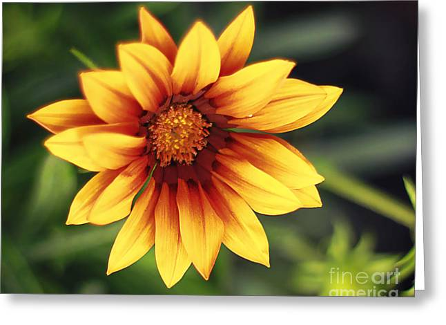 Bright Colors Pyrography Greeting Cards - Daisy May Greeting Card by Jen Pugh
