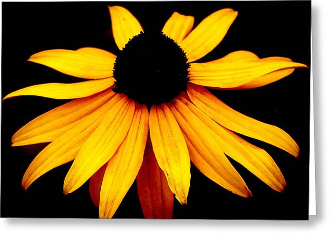 Wildfowers Greeting Cards - Daisy Greeting Card by Monique Morin Matson