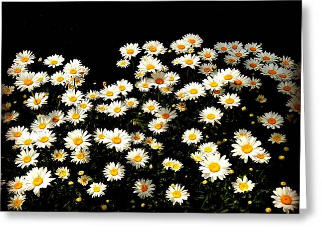 Abstract Rain Greeting Cards - Daisy Power Greeting Card by Carol Toepke