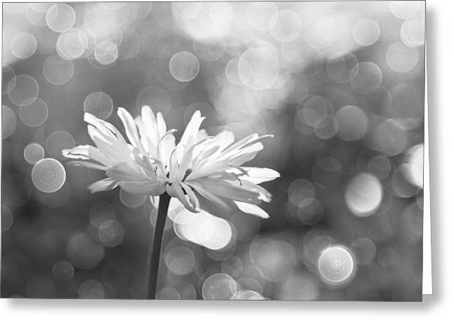 Daisy Rain Greeting Card by Theresa Tahara
