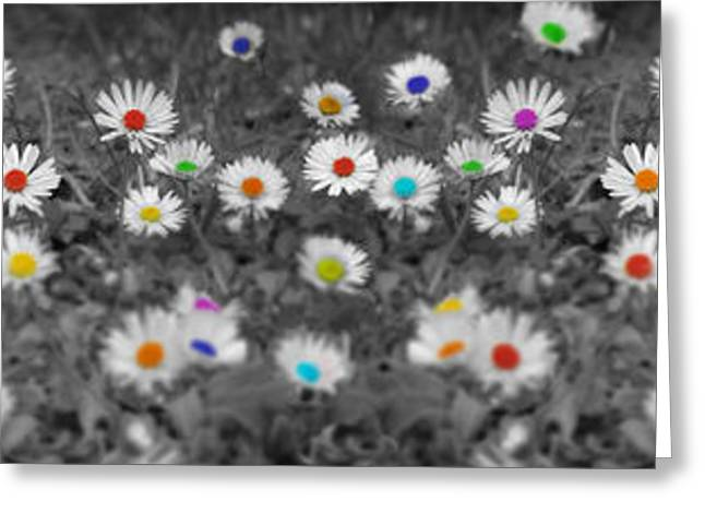 Daisy Greeting Cards - Daisy Rainbow Greeting Card by Mark Rogan