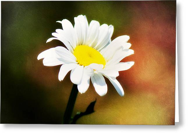 Melanie Lankford Photography Greeting Cards - Daisy Rainbow Greeting Card by Melanie Lankford Photography