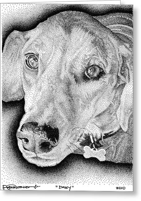 Lab Drawings Greeting Cards - Daisy Greeting Card by Rob Christensen
