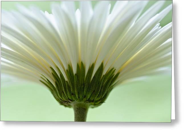 Daisy Sweetness Greeting Card by Christi Kraft