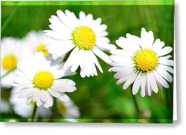 Spring Scenes Mixed Media Greeting Cards - Daisy Greeting Card by Toppart Sweden