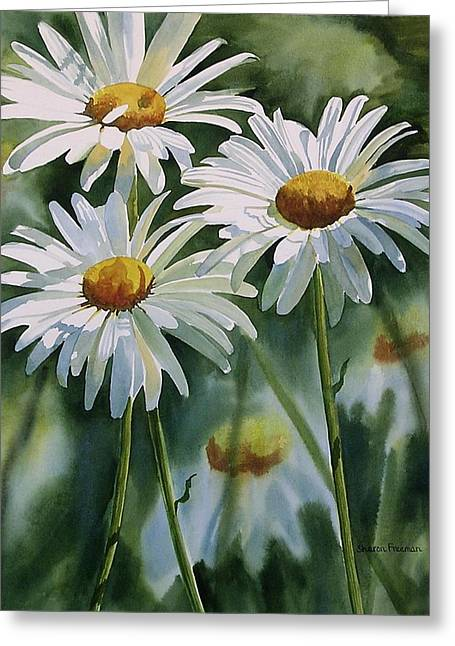 White Daisy Greeting Cards - Daisy Trio Greeting Card by Sharon Freeman
