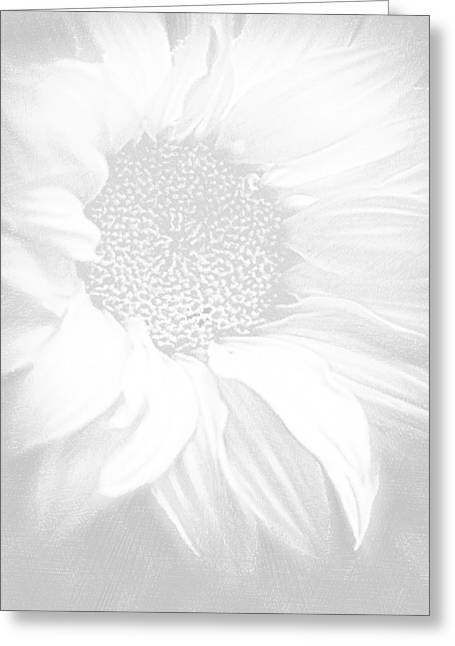 Interior Decorating Drawings Greeting Cards - Sunflower White On White Greeting Card by Tony Rubino