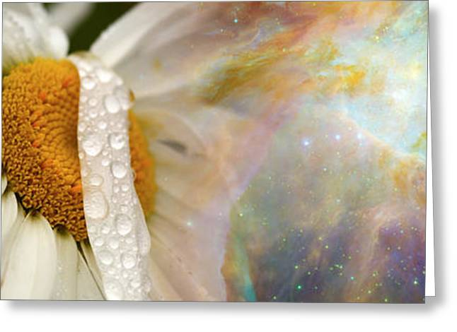 Concern Greeting Cards - Daisy With Hubble Cosmos Greeting Card by Panoramic Images