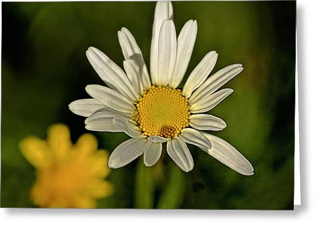 Daisy Greeting Cards - Daisynette - 726-v3a Greeting Card by Variance Collections