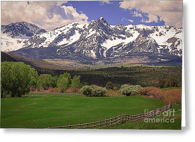Woodland Scenes Greeting Cards - Dallas Divide Colorado Greeting Card by Janice Rae Pariza