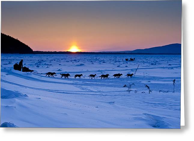 Recently Sold -  - Husky Greeting Cards - Dallas Seavey on the Yukon River Greeting Card by Jeff Schultz
