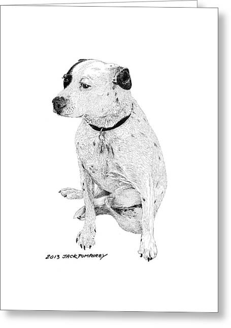 Breed Of Dog Drawings Greeting Cards - Dalmatian Mix good friend Greeting Card by Jack Pumphrey
