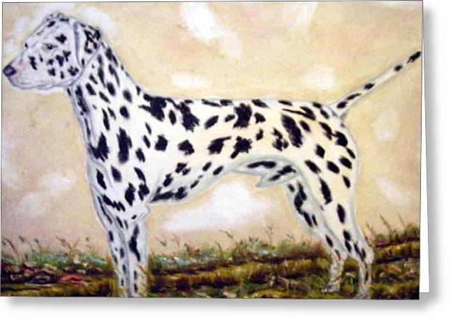 Pat Mchale Greeting Cards - Dalmatian Greeting Card by Pat Mchale