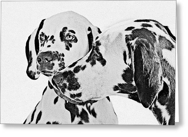 Dog Portraits Greeting Cards - Dalmatians - A Great Breed for the Right Family Greeting Card by Christine Till