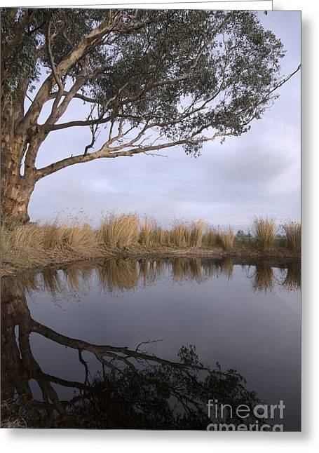 Reflection On Pond Greeting Cards - Dam Greeting Card by Linda Lees