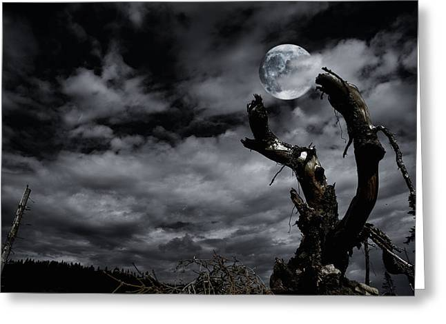 Tree Roots Greeting Cards - Damaged Tree Roots Reaching For A Full Moon Greeting Card by Christian Lagereek