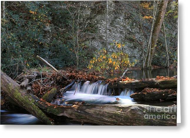 Natural Dam Greeting Cards - Dammed Up in Cataloochee Greeting Card by Benanne Stiens