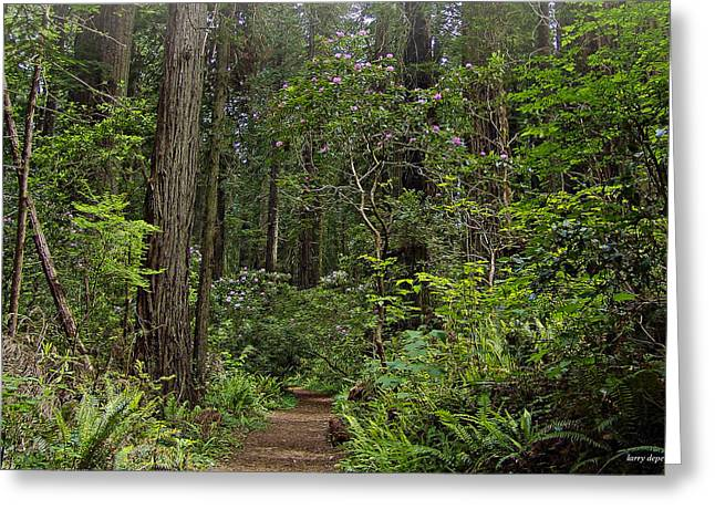 Damnation Photographs Greeting Cards - Damnation Creek Trail Greeting Card by Larry  Depee