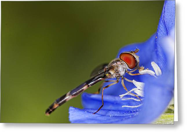 Damselfly Greeting Cards - Damselfly 2 Greeting Card by Jonathan Davison