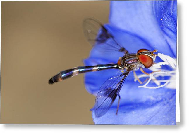 Damselfly Greeting Cards - Damselfly 3 Greeting Card by Jonathan Davison