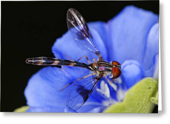 Damselfly Greeting Cards - Damselfly 5 Greeting Card by Jonathan Davison