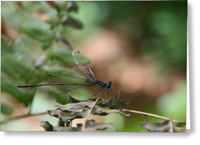 Macro Photography Greeting Cards - Damselfly Greeting Card by Neal  Eslinger