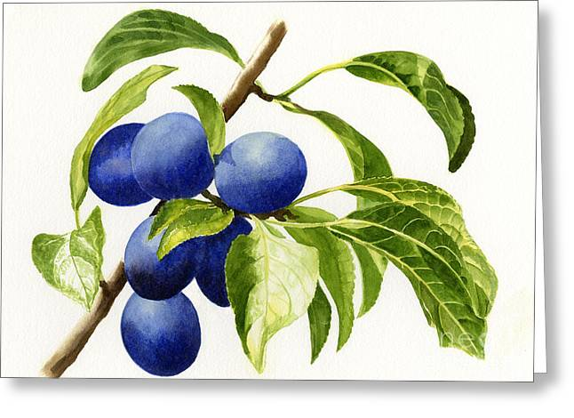 Fruit Tree Art Greeting Cards - Damson Plums Horizontal Design on White Greeting Card by Sharon Freeman