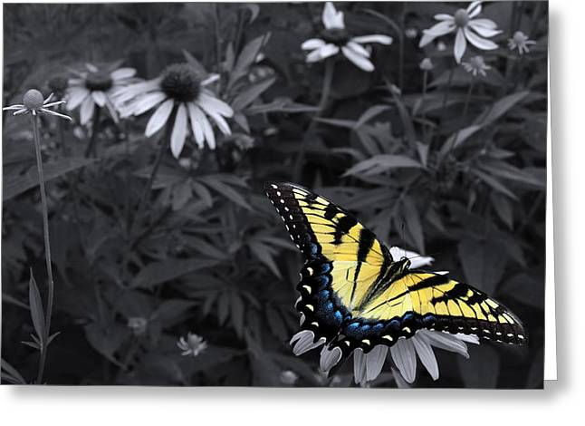 Swallowtail Greeting Cards - Dance in the Garden Greeting Card by Don Spenner