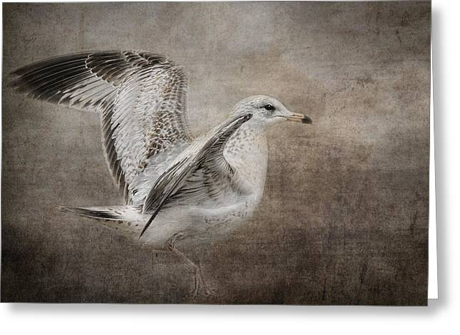 Larus Delawarensis Greeting Cards - Dance of the Lone Gull Greeting Card by Jai Johnson