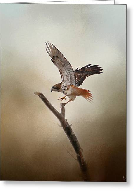 Hawks In Flight Greeting Cards - Dance of the Red Tailed Hawk Greeting Card by Jai Johnson