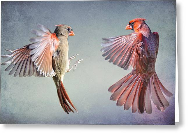 Flying Wild Bird Greeting Cards - Dance of the Redbirds Greeting Card by Bonnie Barry