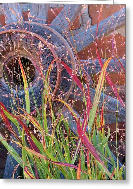 Fall;fallcolors;grass;pinos Altos;new Mexico Greeting Cards - Dance of the Wild Grass Greeting Card by Feva  Fotos