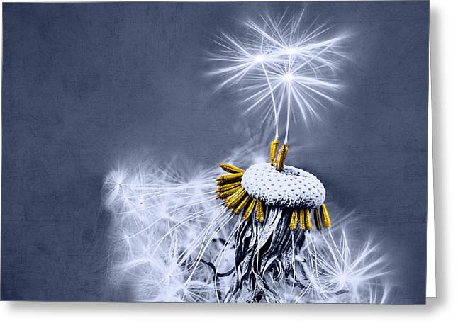 Dandelion Greeting Cards - Dance With Me Greeting Card by Viaina