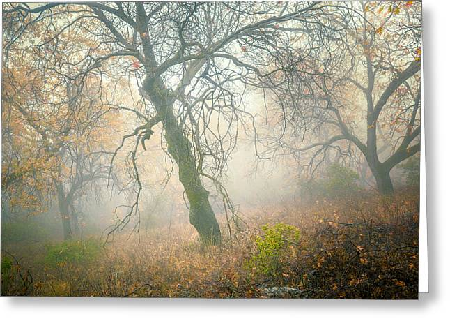 Back Country Greeting Cards - Dancers in the Fog Greeting Card by Alexander Kunz