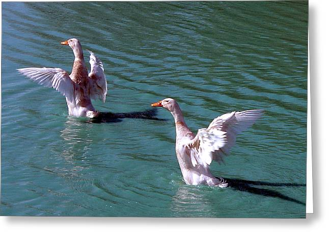 Huntsville Greeting Cards - Dances on Water Greeting Card by Lesa Fine