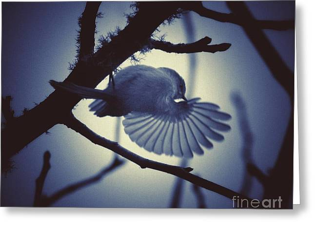 Ruby-crowned Kinglet Birds Greeting Cards - Dancin in the Moonlight Greeting Card by Teresa A Lang