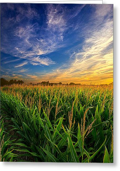 Shadows Greeting Cards - Dancing in the Rows Greeting Card by Phil Koch