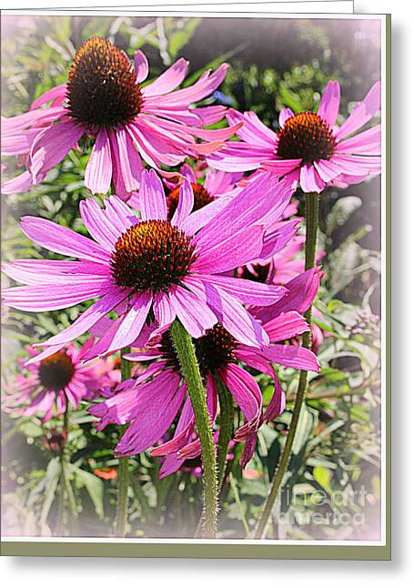 The Nature Center Greeting Cards - Dancing in the Wind - Coneflowers Greeting Card by  Photographic Art and Design by Dora Sofia Caputo