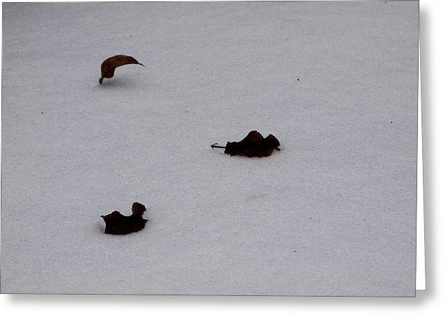 Fallen Leaf Pyrography Greeting Cards - Dancing Leaves in snow  Greeting Card by Mary Tevebaugh