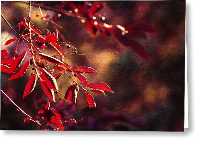 Red Leaves Digital Greeting Cards - Dancing Leaves Greeting Card by Maria Angelica Maira