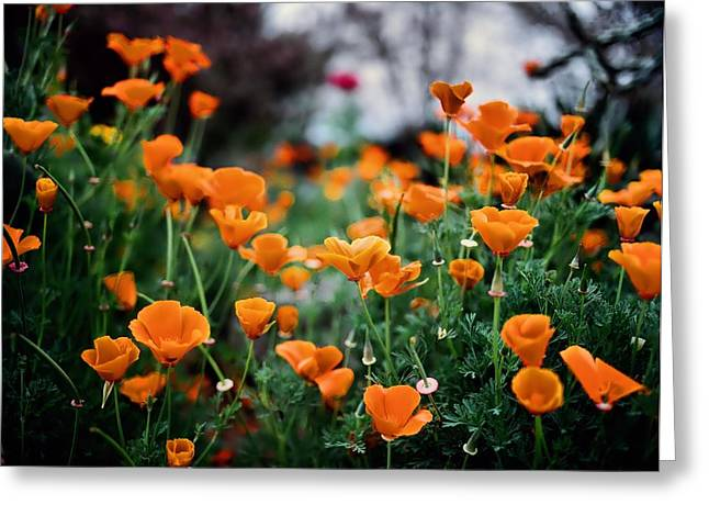 Medium Flowers Greeting Cards - Dancing Poppies Greeting Card by Linda Unger