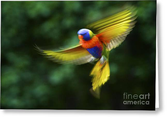 Dancing Rainbow Lorikeet 7 Greeting Card by Heng Tan