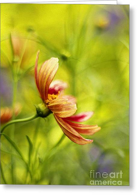 Dancing Petals Greeting Cards - Dancing Solo Greeting Card by Darren Fisher