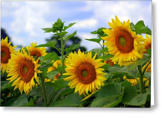 Farmers Field Greeting Cards - Dancing Sunflowers Greeting Card by Kathleen Struckle