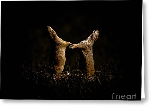 Howl Greeting Cards - Prairie Dogs Dance At Night Greeting Card by Robert Frederick