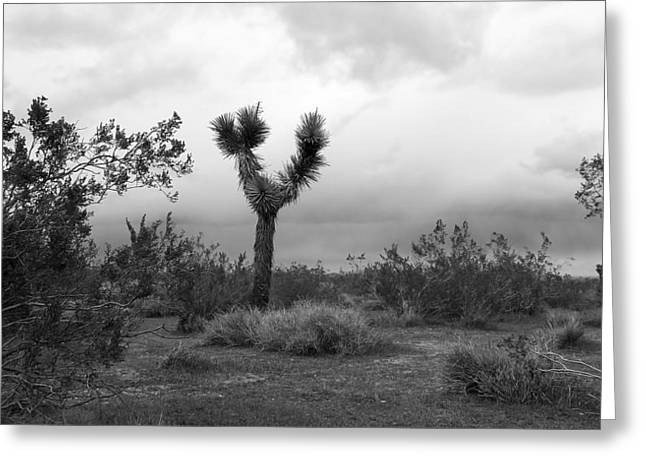 Dancing Though Its Gray Greeting Card by Glenn McCarthy Art and Photography