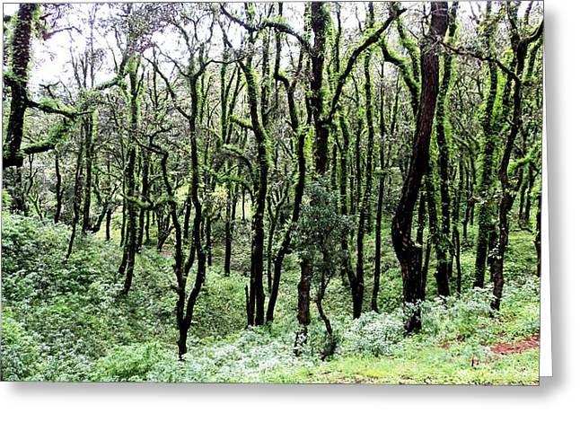 Dancing Trees Greeting Card by Jyoti Vats