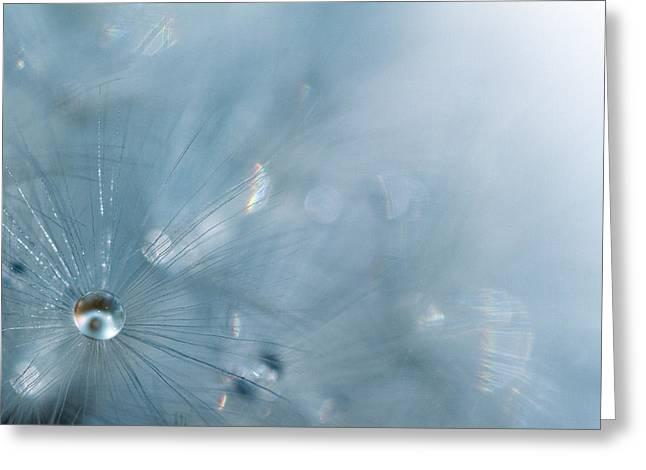 Luminosity Greeting Cards - Dandelion - Luminosity Greeting Card by Rebecca Cozart
