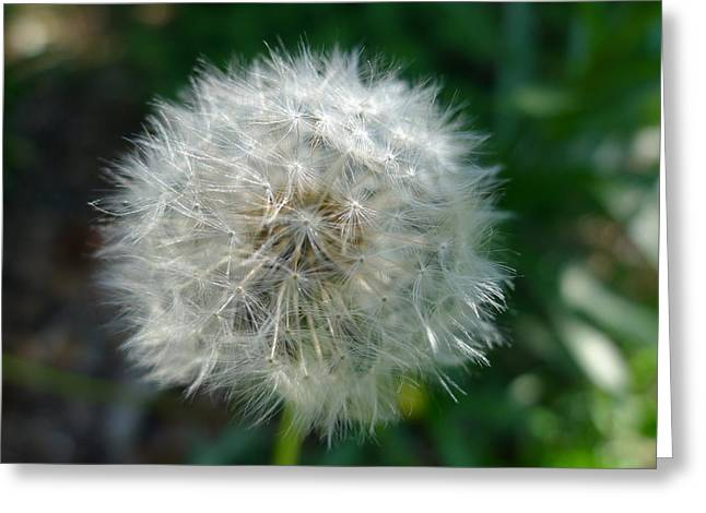 Asexual Greeting Cards - Dandelion 3 Greeting Card by Richard Reeve