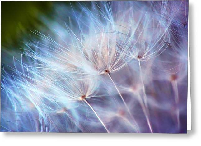 Recently Sold -  - Lions Greeting Cards - Purple Wisp Greeting Card by Damon Clarke